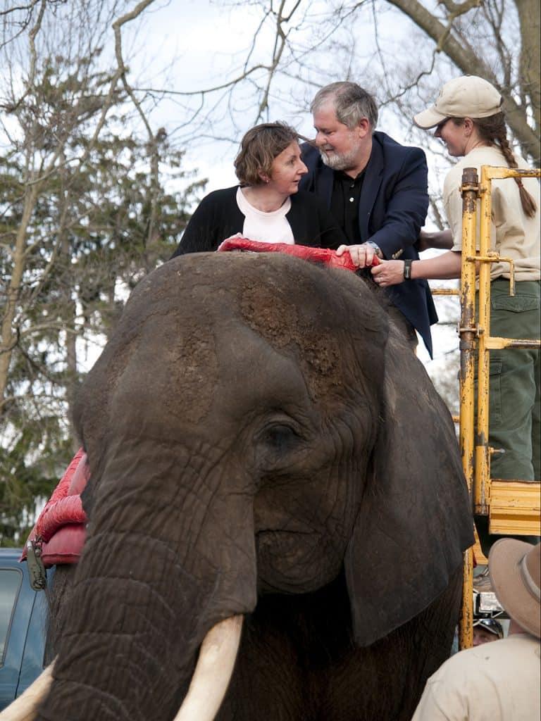 Centralhallapalooza elephant
