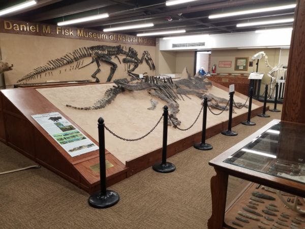 Daniel M. Fisk Museum of Natural History with Dinosaur Bones
