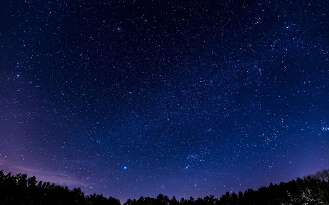 Stars over forest at night