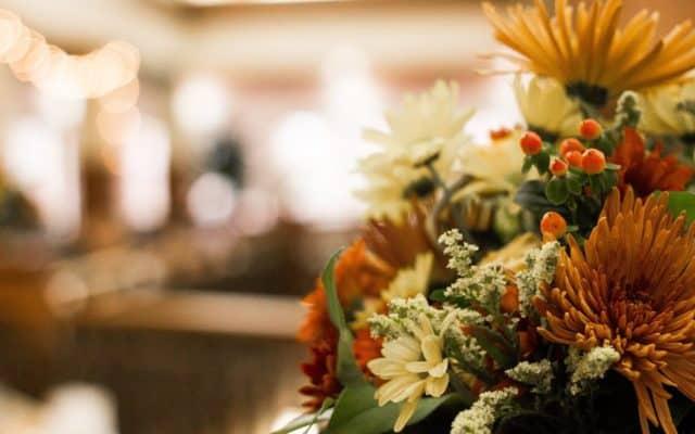 Closeup of orange and white flowers.